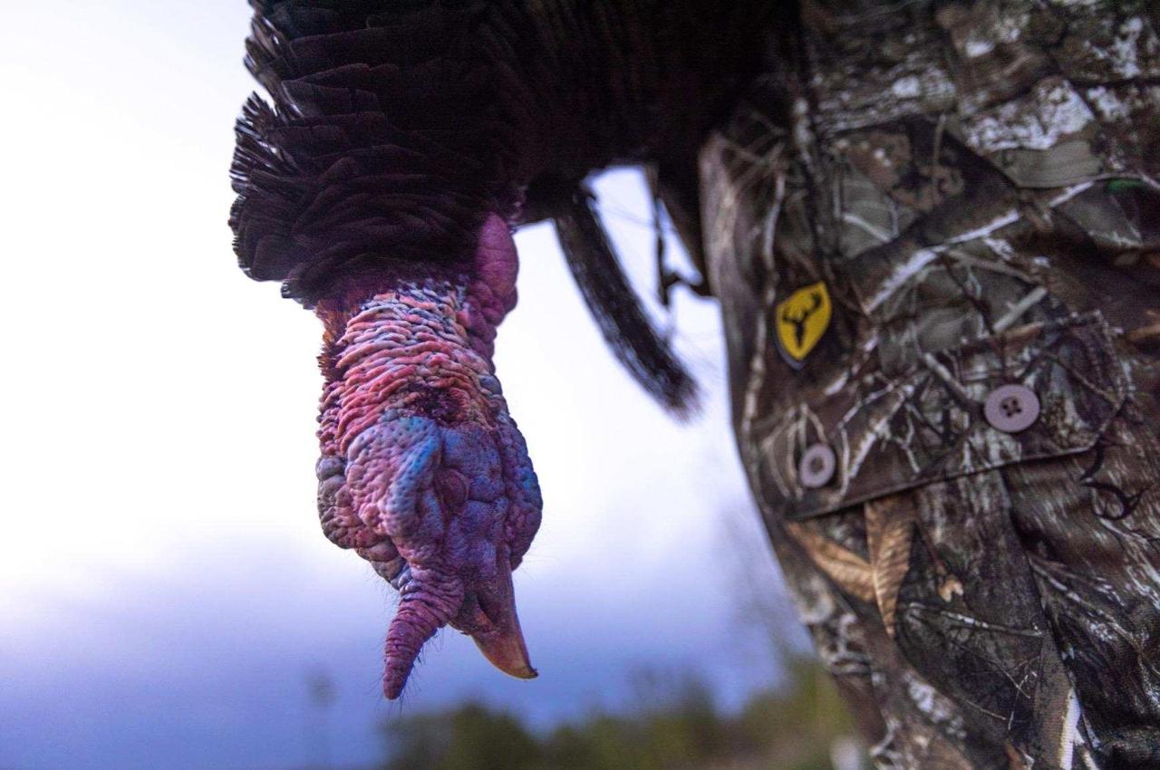 matt addington turkey photo